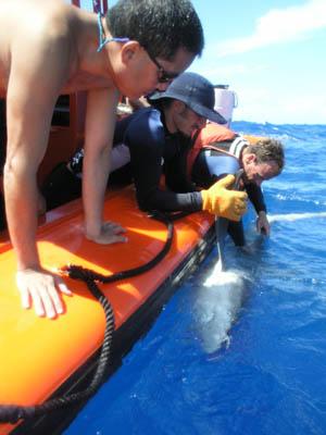 Shark Tag Baby